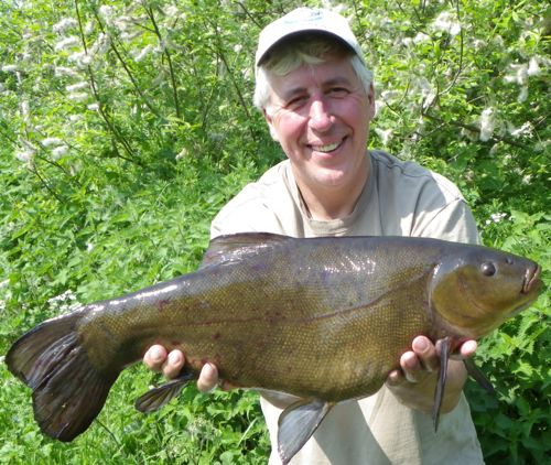 My target this season is a tench bigger than this 9.11 PB from Reading and District's Englefield Lagoon - I've a feeling the cold spring means that the big girls won't show in numbers much before June 16th.