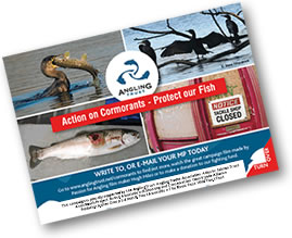 Thousands of Action on Cormorants postcards have been sent in to MPs