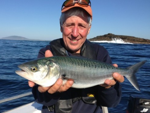 In Australia this fish is known as a salmon but in neighbouring New Zealand it's called a Kahawai - all very confusing!
