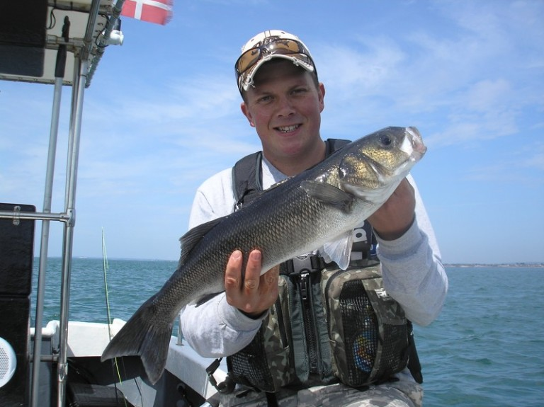 This cracking  six pound South Coast bass came to well known lure angler Paul Parnell. There won't be too many more of these around unless stocks are helped to recover.