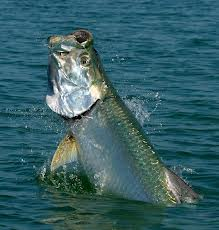 Martin has plans for a birthday tarpon in 2014