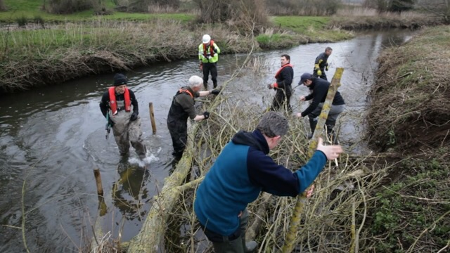 Installing woody debris as cover for young fish