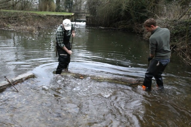 Creating a gravel riffle to aid spawning habitat on the recovering  River Blackwater