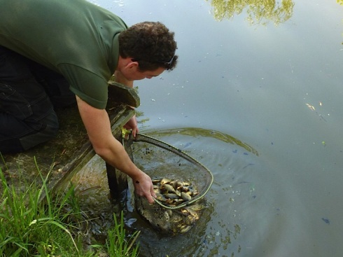New crucian waters are being established with stock from both the EA's superb fish farm at Calverton and in the future from local 'growing on ' ponds