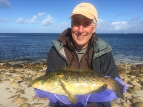 Another fine St Martin's Island wrasse