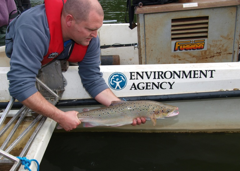 Salmon And sea trout can now be found in the river along with zander and even grayling.